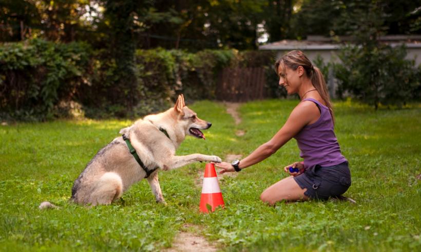 I cani ricordano proprio come le persone: lo conferma una ricerca coordinata dall'italiana Fugazza