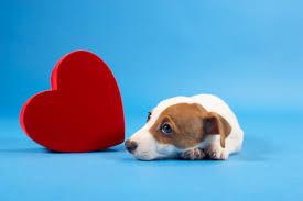 Adottare un cane allunga la vita: e il Centro Cuore di Milano 'somministra' cuccioli ai pazienti