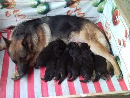 A Cecina consiglio comunale in ritardo causa… accoppiamento del cane presidenziale