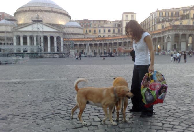 Trentasei mosse contro il randagismo: sono gli articoli della pld De Pascale in Regione Campania