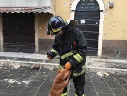Soccorso degli animali nelle calamità, siglato il Protocollo per darsi una zampa