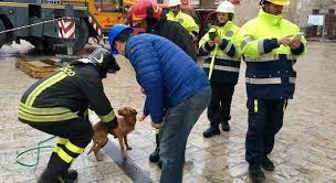 A Norcia la speranza post-terremoto viaggia su quattro zampe: nella zona rossa spunta un cagnolino