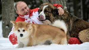 Yume gioca sulla neve con Putin e un altro dei suoi cani