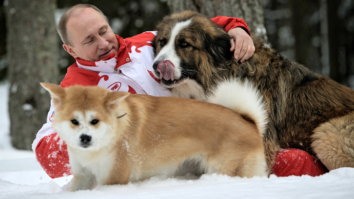 Un 'principe consorte' per l'Akita Yume. Dal Giappone un altro cucciolo in regalo per Putin