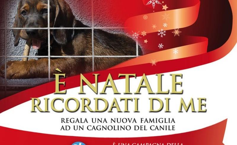 """A Natale 22mila cuccioli sotto l'albero. Ma le associazioni lanciano l'appello: """"Non comprare: adotta!"""""""