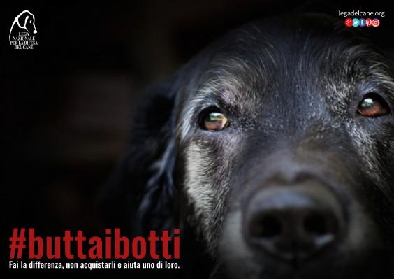 Torna #buttaibotti, l'edizione 2016 della campagna LNDC per feste a misura di pet
