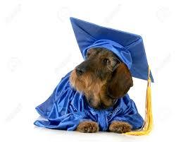 Pisa, il rapporto uomo-cane si studia all'università: giornata gratuita di approfondimento