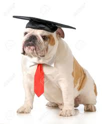 laurea università 3