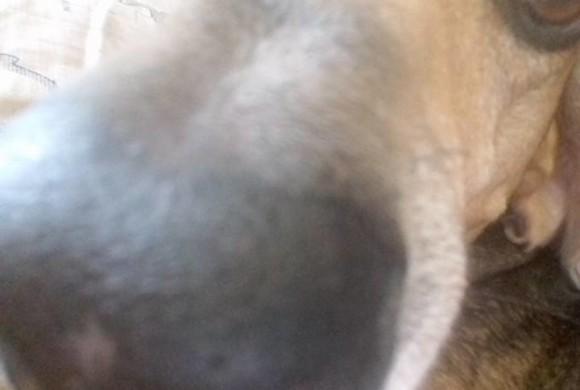 Il naso del cane si fa in 3D: la tecnologia sperimenta l'olfatto artificiale per la caccia agli esplosivi