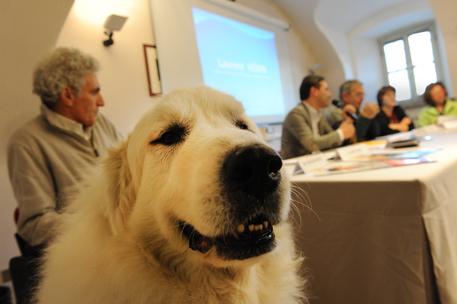 Adozioni sì ma consapevoli, in Val d'Aosta scatta la campagna per il canile
