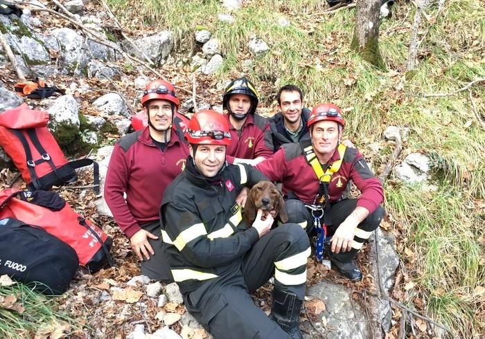 Precipita per 80 metri in un burrone, segugio tratto in salvo dai vigili del fuoco