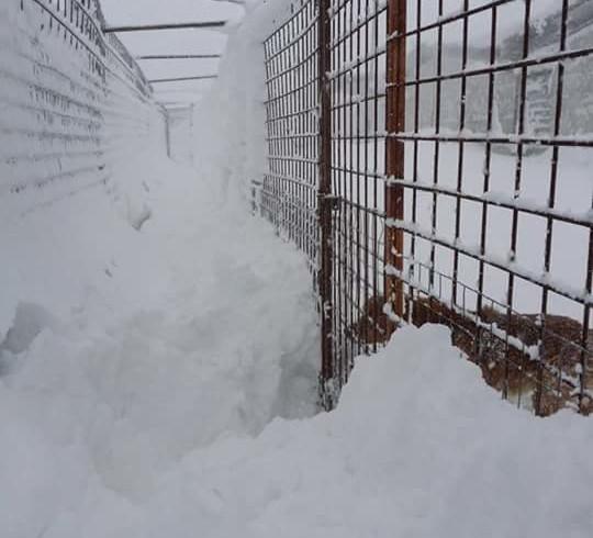 """+++ Punto meteo – Nuova allerta neve, LNDC: """"Non facciamoci trovare ancora impreparati"""" +++"""