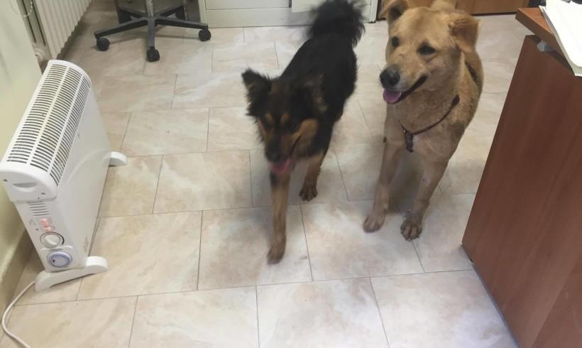 Aiuto petaloso per i cani in ostaggio del maltempo: la Margherita di Venezia sboccia per King e Chicca da Cerignola