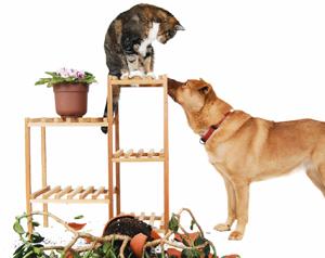 Fido fa business. Anche per le assicurazioni: sconti per puppy e over 10 o incrementi a seconda delle razze