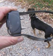Collare elettrico per addestrare il cucciolo, scatta la denuncia