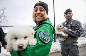 Dramma bianco al Rigopiano, i tre cuccioli trovati in vita riaccendono la speranza di altri sopravvissuti