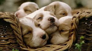 Cuccioli venduti in negozio, California primo stato Usa a dire basta