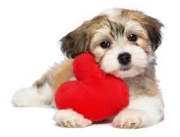 """""""Niente cuccioli in regalo per San Valentino"""": appello Aidaa che stima 8mila pet in dono tra innamorati"""