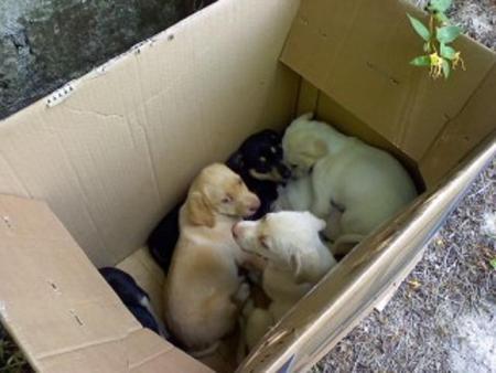 I guaiti dallo scatolone richiamano un agente della stradale: cinque cuccioli abbandonati messi in salvo