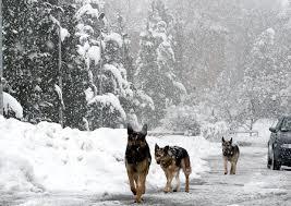 +++ Punto meteo – Emergenza freddo, secondo le stime Aidaa sono 40mila i randagi in difficoltà +++