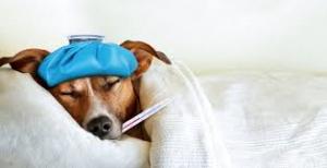 influenza malato 1