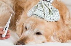 La cura del cane in tempo di coronavirus, i suggerimenti dell'Enpa