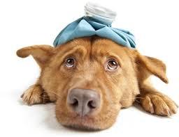 influenza malato 4