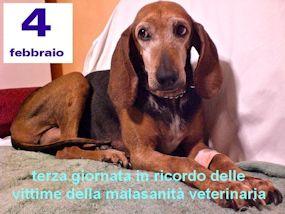"""""""Mai più come Lea"""": il 4 febbraio la giornata contro la malasanità veterinaria"""