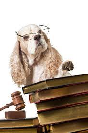 In auto col semaforo rosso per salvare un cagnolino ferito: il giudice gli restituisce i punti della patente