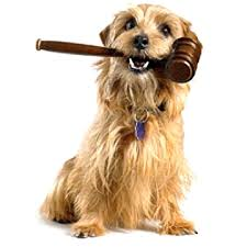 legge tribunale