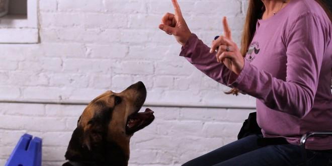 Parlare ai cani come ai bambini? Funziona, ma solo con i cuccioli. Ora lo dimostra uno studio francese