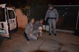 Sfregiata con acido a Rimini, recuperato il cane del presunto aggressore