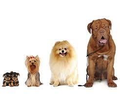 A Las Vegas Amazon scommette sull'intelligenza artificiale: e riconosce anche i 'volti' dei cani