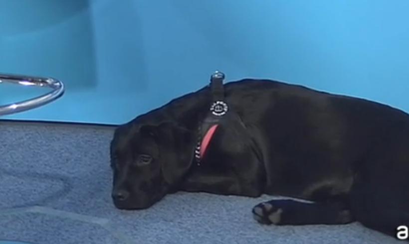Una Reginella per Tosca: è il cane l'amore segreto della cantante nelle ore libere