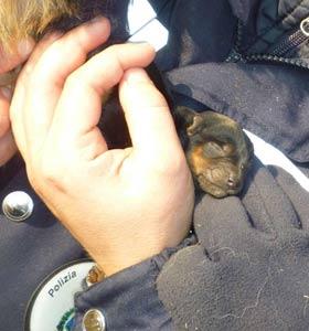 Modena, allevatori condannati per maltrattamento di 356 cani. L'inchiesta partita nel 2011