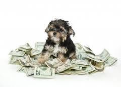Spese veterinarie, dal 2020 detraibili fino a 500 euro