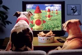 Ecco cosa piace ai cani in tv. Intanto Oltralpe si studia un canale tutto per loro