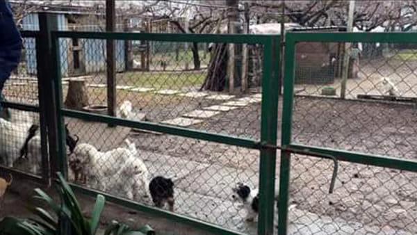 Nel Veronese intervento Enpa in allevamento abusivo. In salvo 34 cagnolini