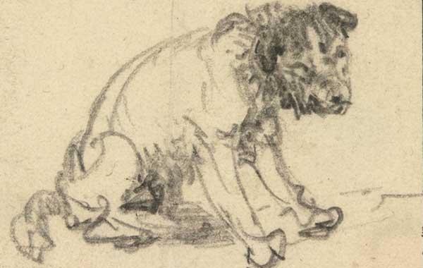 Rembrandt schizzò un cane. Sì ma col gessetto. Scoperta in Germania una nuova opera dell'artista