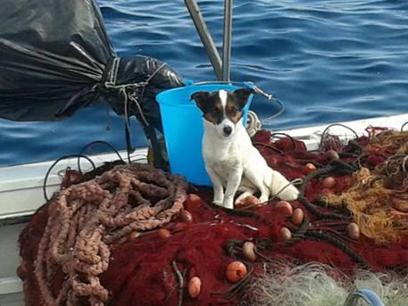 Abbandonato, il cane si getta in mare e viene salvato da pescatori