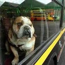 Cani con una zampa sul predellino dei bus toscani: via libera unanime alla legge in commissione regionale
