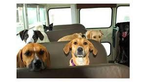 Insegnare a sedersi tranquillamente mentre l'auto è ferma
