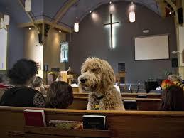 Il parroco allontana una donna col suo cane dalla chiesa: parapiglia animalista a Genzano