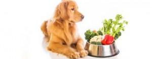 L'alimentazione sana è anche per il cane presidio indispensabile alla prevenzione