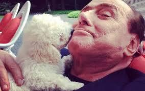 Nuovi ingressi a quattro zampe in casa Berlusconi: adottati a Olbia tre trovatelli