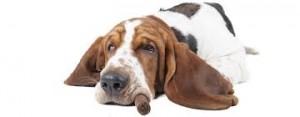 Il fumo passivo è un fattore di rischio provato per il cane