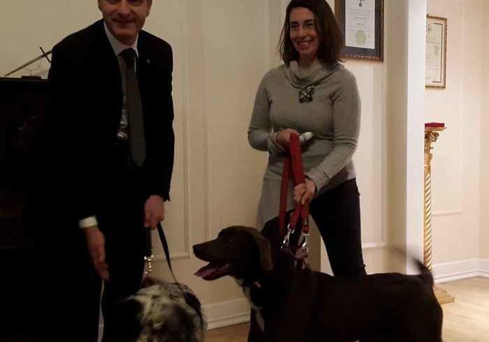 Cuore di cane, dalle zone del terremoto 4 zampe abbandonati a Milano curano i cardiopatici
