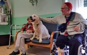 Morto avvelenato Jazz, il cane-infermiere degli anziani di Meconico. Ldnc invoca provvedimenti immediati