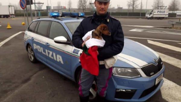 Scaraventano il cucciolo fuori dal finestrino e scappano in auto. Indaga la polizia