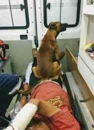 Accompagna il suo umano in ambulanza poi lo aspetta fuori dall'ospedale: la devozione del cane Marrom commuove il Brasile
